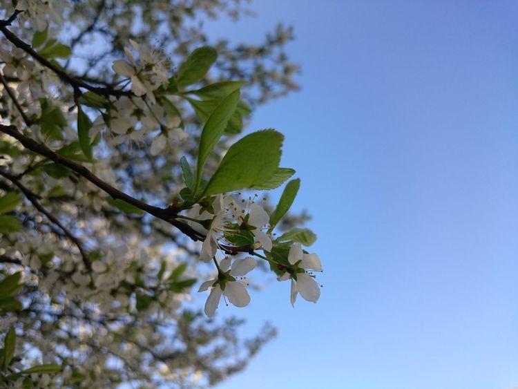 Flower Macro Sky Petal Pollen Background Backgrounddefocus Nature Relaxing