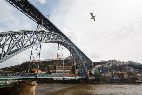 Low angle view of Dom Luis I bridge. Dom Luís I Bridge Douro  Porto Portugal Animal Animals In The Wild Arch Arch Bridge Architecture Bird Bridge Bridge - Man Made Structure Building Exterior Built Structure Cloud - Sky Engineering Flying Nature Outdoors River Seagull Sky Transportation Vertebrate Water