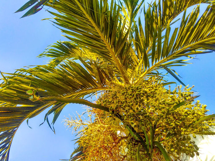 Low angle view of date palm tree against sky