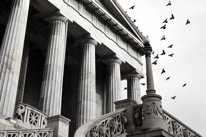 Architectural Column Architecture Art Athens Birds DORIC BUILDING Doric Order Greece Historic History National Library Ornate Staircase Stairs Theophil Hansen
