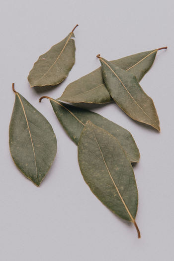 Close-up of dry leaves on white background