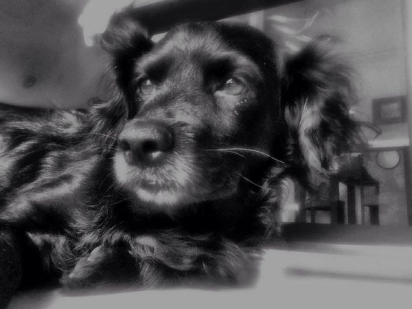 Mi hijo By Pit O. Blacoynegro Perrito Dog Blackandwhite Animal Photography Iphonephotography My Smartphone Life