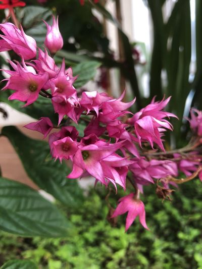 Nature_collection Nature Flower Growth Beauty In Nature Nature Fragility Freshness Pink Color Petal Plant Close-up Day Tree Flower Head