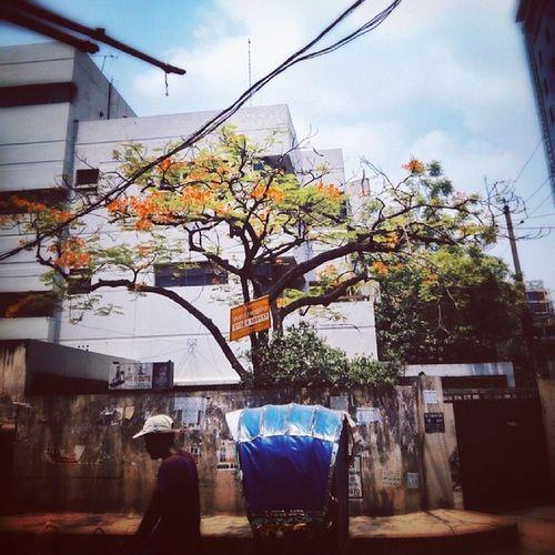 Summer Noon Street Dhaka Bangladesh