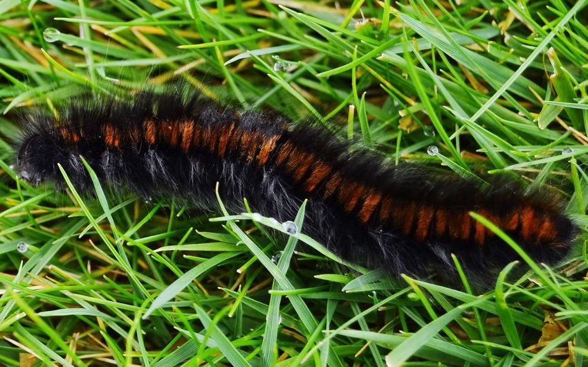 Wildlife Etomology Nature Catterpillar Animal Themes Crawling Outdoors Beauty In Nature Fragility Beauty In Nature Carradale