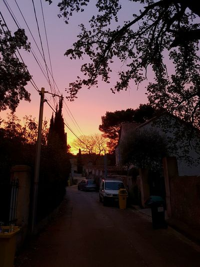 French Quarter Light Camera French Tree Art Sunset Tree Silhouette Sky Building Exterior Nature No People Architecture City Branches City France Hanging Out Outdoors Beauty In Nature Tree Nature Tourism EyeEm Gallery European  My Year My View