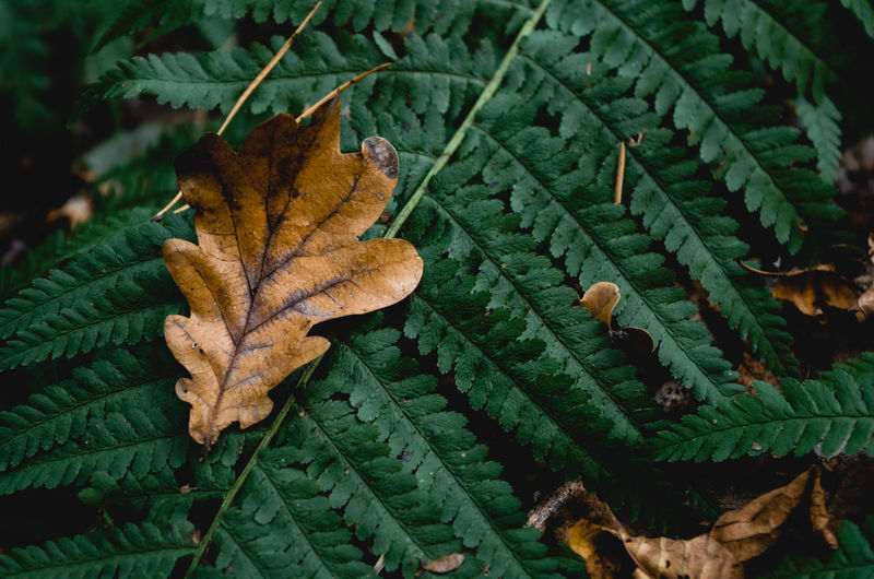 Autumn Autumn Leaves Fall Colors Falling Leaves Autumn Beauty In Nature Change Close-up Fall Leaves Focus On Foreground Green Color Leaf Leaf Vein Leaves Natural Condition Natural Pattern Nature No People Outdoors Plant Plant Part