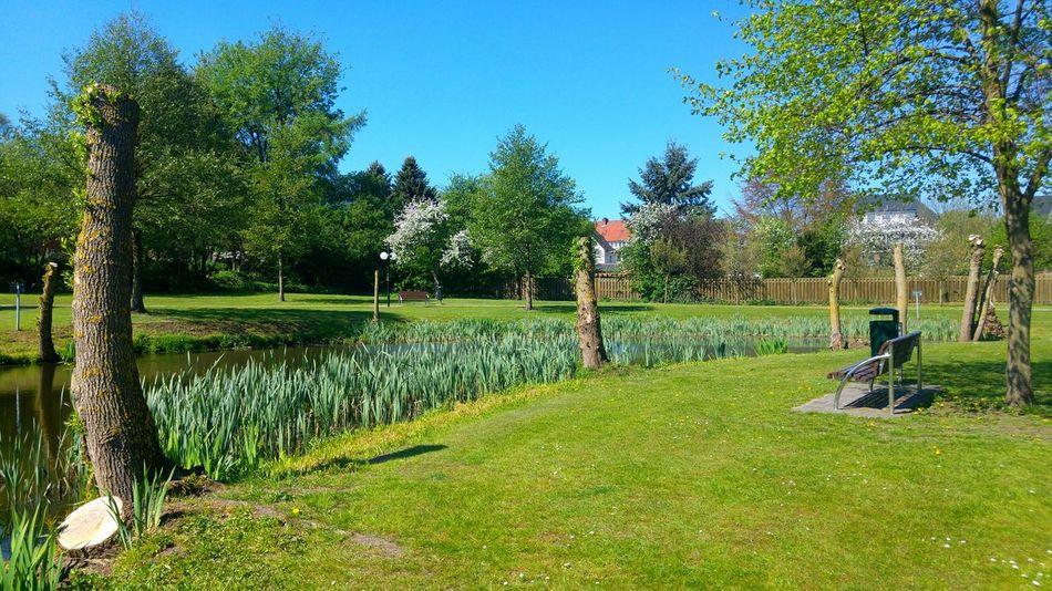 Park Parks Park Bench Park View Parkbank Hankensbüttel Niedersachsen Lower Saxony Deutschland Germany Teich Pond