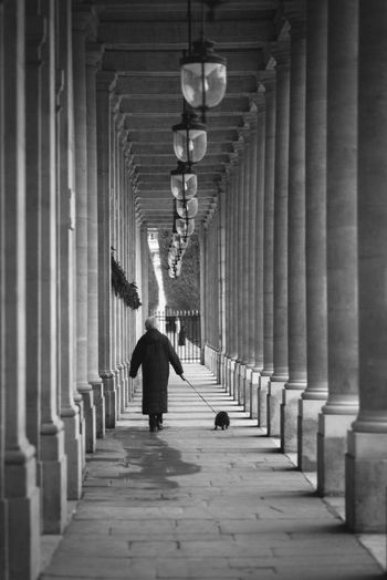 Rear view of person walking with dog by columns in passage