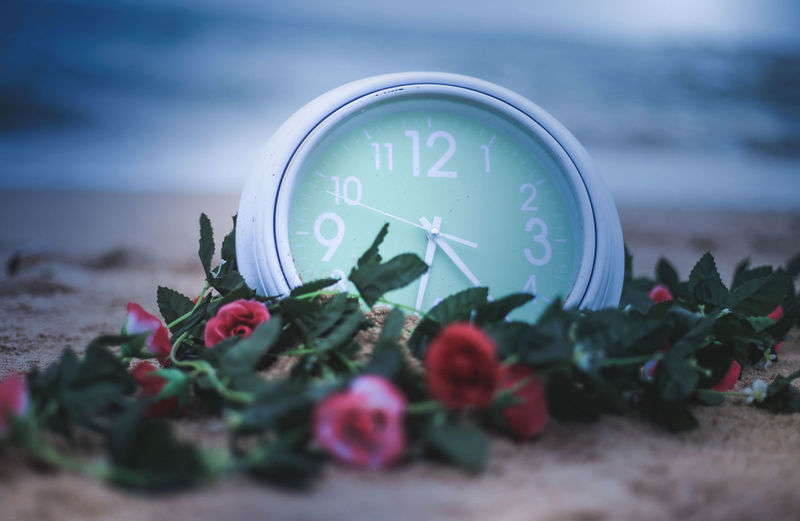 our times,our story Accuracy Beauty In Nature Clock Clock Face Clock Hand Close-up Communication Flower Flowering Plant Freshness Instrument Of Time Land Minute Hand Nature No People Number Outdoors Plant Sand Selective Focus Time