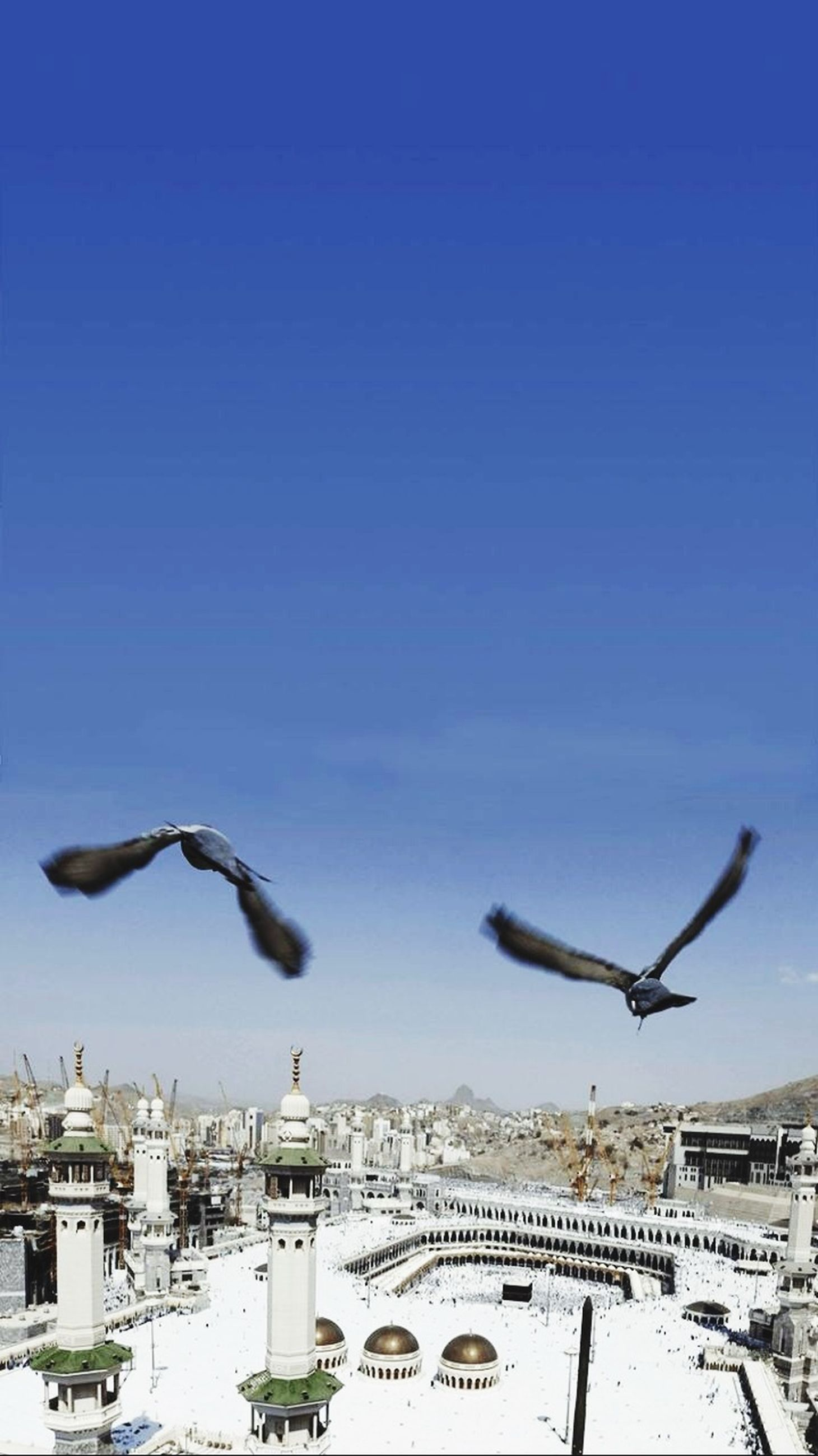 bird, flying, animals in the wild, animal themes, seagull, spread wings, wildlife, mid-air, architecture, built structure, blue, building exterior, clear sky, perching, sky, day, pigeon, low angle view, three animals, one animal