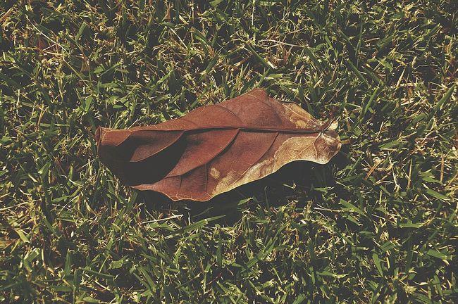 Folha Folhas Que Caem Folhas Secas  Folhas Caídas Marron