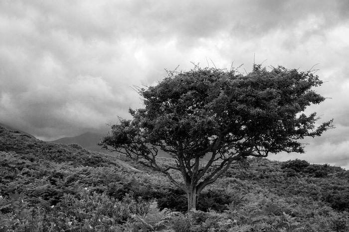 Tree Ferns Blackandwhite Monochrome Mourne Mountains Beach Hills Dunes