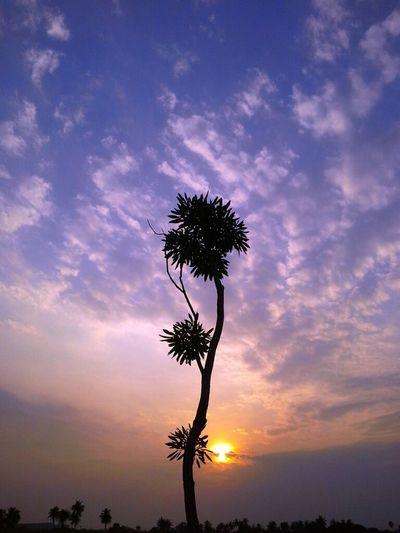 ยืนเดียวดาย..ต้นไม้น้อย.. Landscape Sun_collection Thailand_allshots Nature_collection Sunset