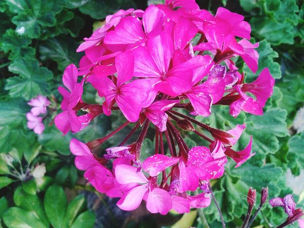 Amazing Hi! Relaxing Flowers,Plants & Garden Pink Flower Pink Love Nature_collection Naturelovers Flower