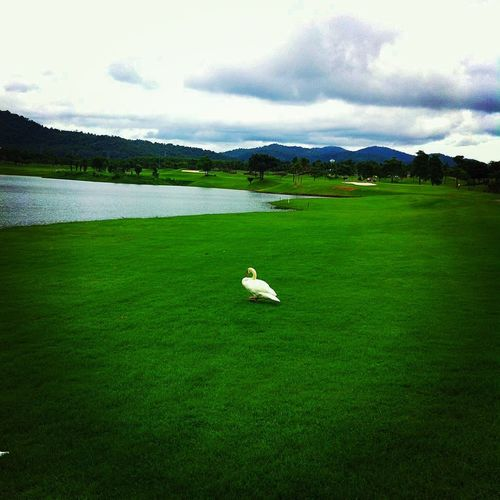 Pattana Golf Club And Resort Golfing Golfcourse Green EyeEm Nature Lover Sun_collection, Sky_collection, Cloudporn, Skyporn Mountains Lake Eye Em Around The World Hello World