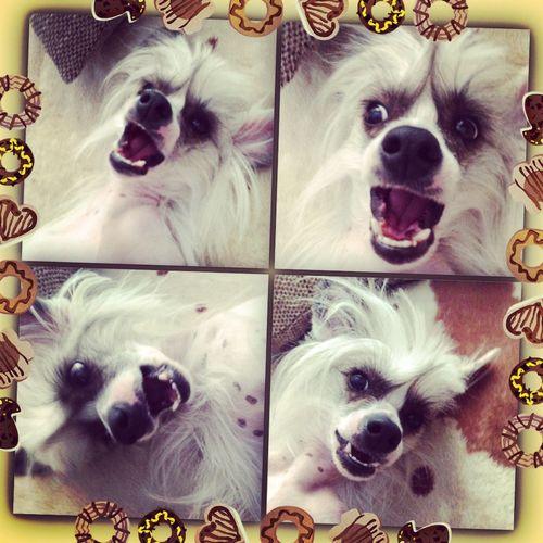 Selfie ✌ Selfiedog Dog Love Dog Summer Dogs