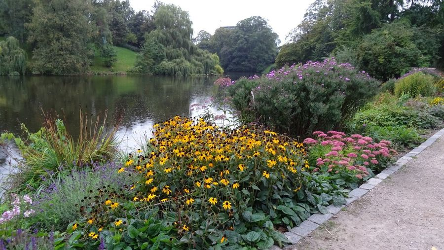 View of flowering plants by lake