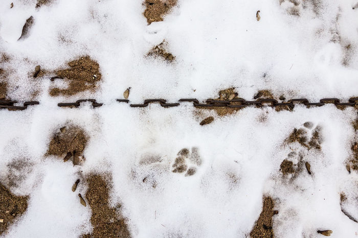Animal Track Chain Chains Close-up Cold Cold Temperature Day Nature No People Outdoors Paw Print Snow Snow ❄ Stabil Weather White Color Winter
