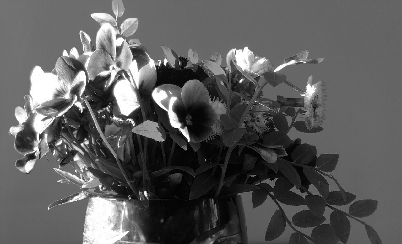 flower, growth, petal, fragility, beauty in nature, no people, nature, plant, freshness, flower head, close-up, blooming, day, indoors