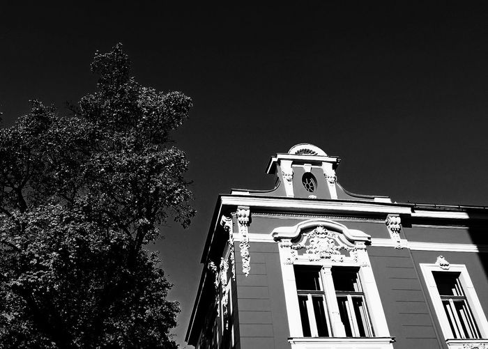 Lookingup Trees Architecture Buildings That Inspire EyeEmBestPics Eyem Best Shots Appreciate The Moment Perspective Black And White Seeing The Sights