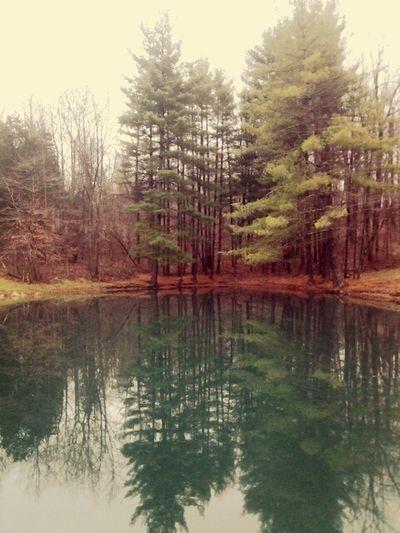 Pond Fishing Beautiful Nature