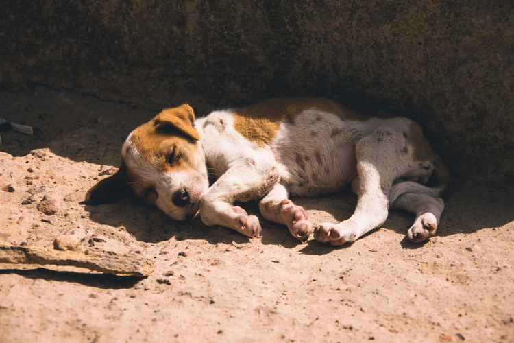 Mammal Relaxation Animal Themes Animal One Animal Vertebrate Pets Dog Canine Domestic Domestic Animals Lying Down Sunlight Resting No People Sleeping Day Nature Africa