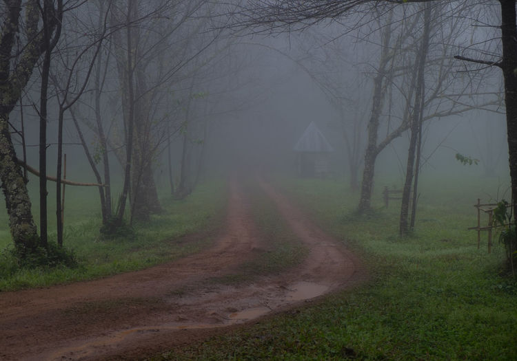 View of bare trees in fog