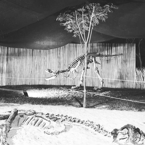 Dinosaurs Shadow Lights Wildlife & Nature Wild Animal Outdoors Extinction Explore