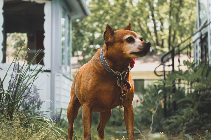 Dog Pets Domestic Animals Animal Themes One Animal Mammal Built Structure Day Building Exterior Pet Collar Outdoors No People Architecture Tree Close-up Plant EyeEm Best Shots EyeEm Nature Lover Pet Portraits