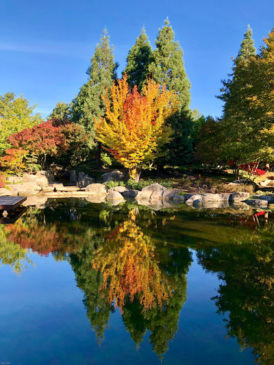 Fall colours in Planten un Blomen city park in Hamburg, Germany Reflection Water Tree Plant Autumn Nature Sky Waterfront Lake Change Beauty In Nature Tranquility No People Tranquil Scene Day Scenics - Nature Growth Outdoors Park