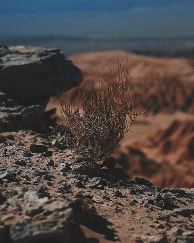Close-Up Of Dead Wild Grass