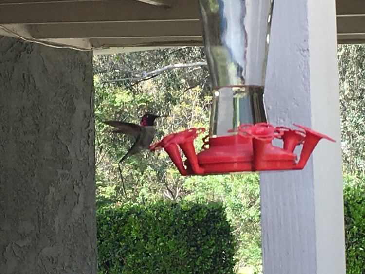Check This Out EyeEm Nature Lover No Edit/no Filter Hummingbird Enjoying Life part 1 of 4