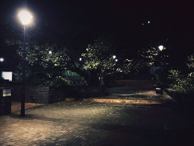 Night Illuminated Tree Street Light Park - Man Made Space Growth Steps The Way Forward Tranquility Diminishing Perspective Entrance Park Bench Lens Flare Nightlife Nightshot Leaves🌿