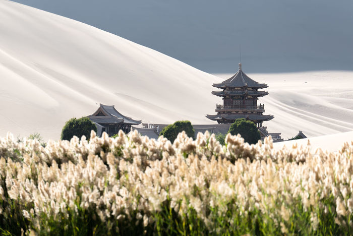 The Singing Sand Dunes of Dunhuang, Gansu, China ASIA Dessert Gobi Desert Silk Road Architecture Beauty In Nature Building Exterior Built Structure China Day Field Flower Freshness Gansu Nature No People Outdoors Place Of Worship Religion Sky Spirituality Travel Destinations Tree