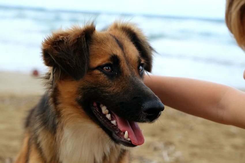 EyeEm Selects Dog Animal Outdoors Domestic Animals Affectionate Summer Mammal Adult Happiness Pets Sand Beach One Animal Day Cute Friendship Puppy Beauty Protruding Sea Watercolor Photooftheday Photographer Vacations