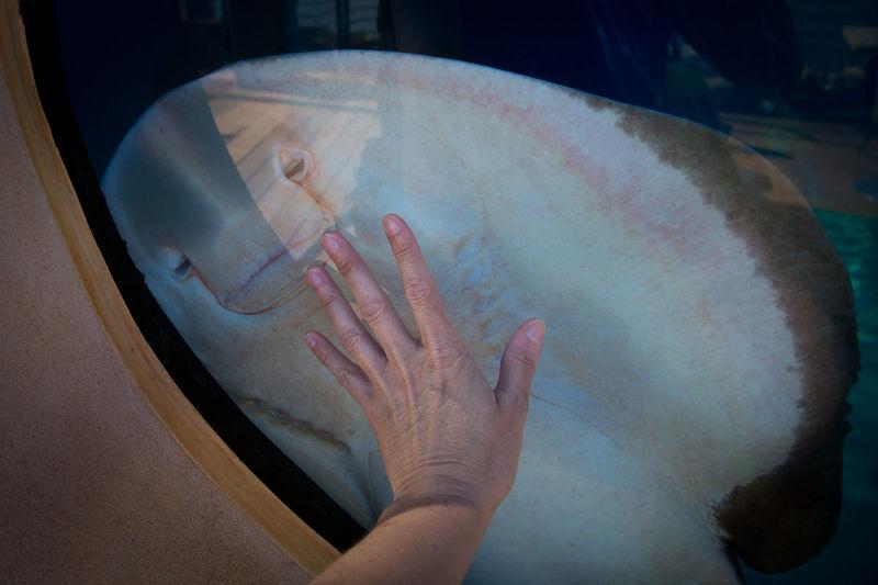 Close-up of man touching stingray at muse