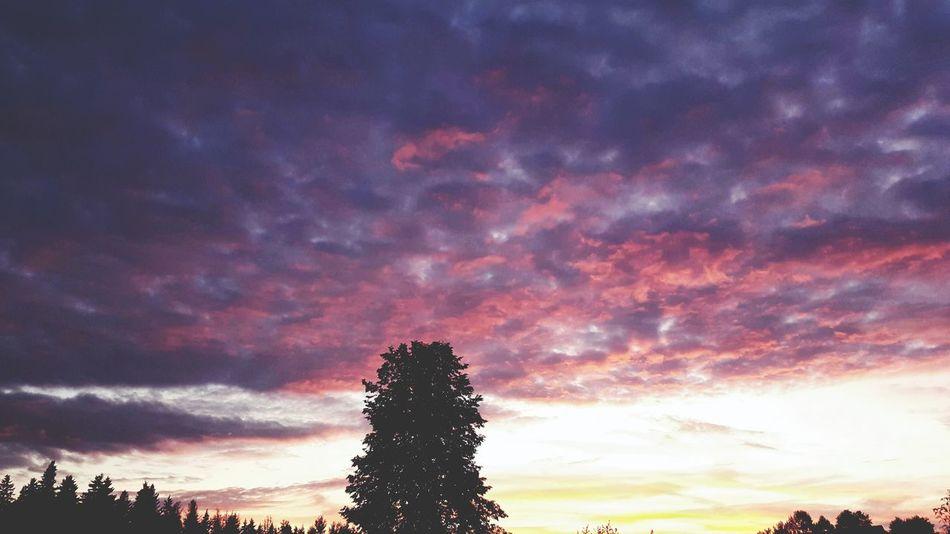 Sunset Summer Beauty Wonderful Sky Myphoto Russia