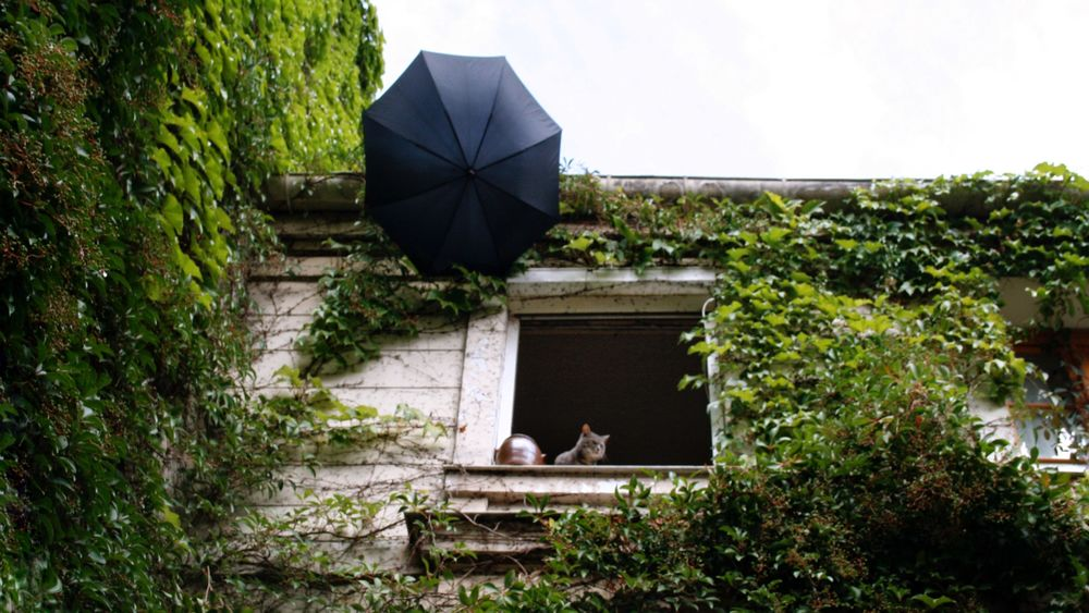 Cat's life Paris France Street Street Photography Cat View Outdoors Ivy Ivy Leaves Ivy Wall Ivy Covered No People Window Umbrella Travel Destinations Catslife Happy Traveling Sky Travelphotography Tranquility Travel Beauty In Detail Love Paris Paris, France  EyeNewHere The Street Photographer - 2017 EyeEm Awards Your Ticket To Europe The Week On EyeEm EyeEmNewHere Pet Portraits Mix Yourself A Good Time