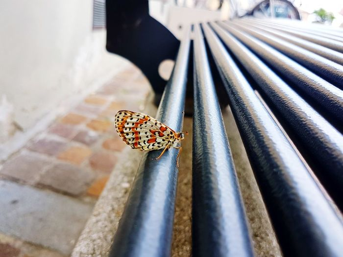 Close-up of butterfly on metal pipe