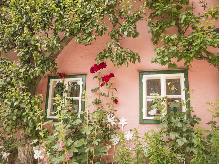 Architecture Austria Building Exterior Built Structure Casements Green Growth Hallstatt House Leaf Plant Potted Plant Red Rose Relaxing Window
