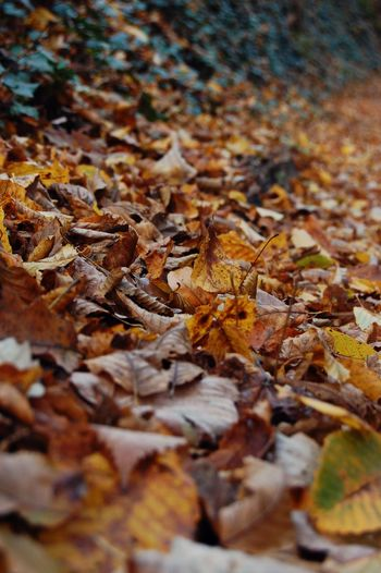 Close-up of leaves in autumn