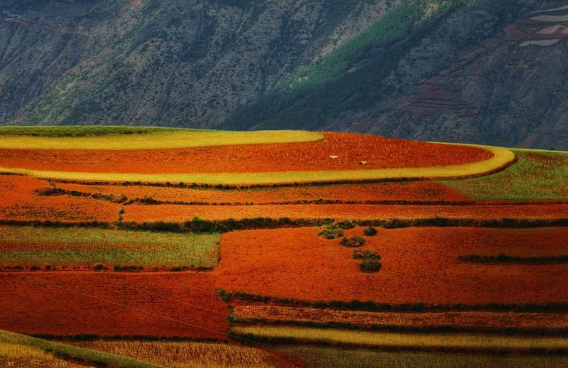 Yunnan China Photos Landscape_photography Landscape_Collection China Rural Scene Agriculture Field Red Cereal Plant Landscape Patchwork Landscape Terraced Field Cultivated Land Rice Paddy Farmland Rice - Cereal Plant Agricultural Field Plantation