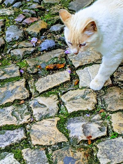 High angle view of cat looking away on rock