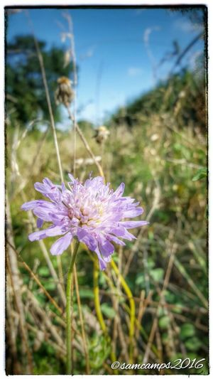 Last Days Of Summer Flower Flower Head Wildflower In Bloom Summer Time  Summer2016 Rural Country Beauty In Nature Nature