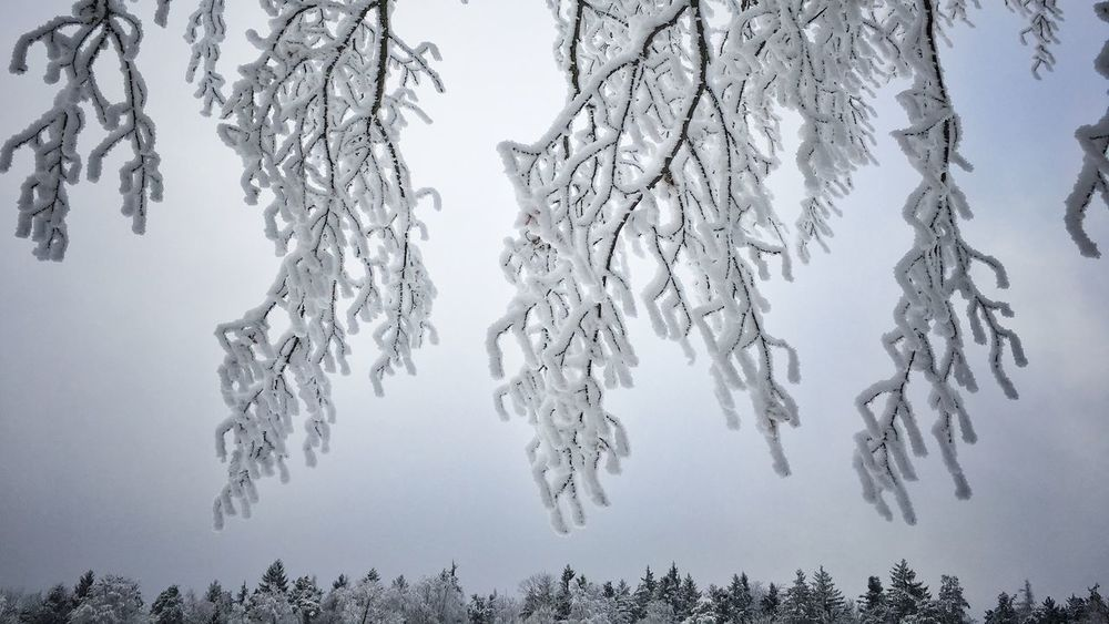 Tree Cold Temperature Outdoors Interesting Perspectives Nature Photography Winter Beauty In Nature First Snow Taking Photos White Color Nature Nice View Forest
