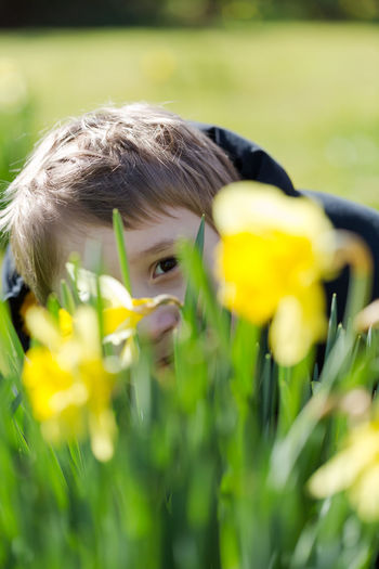 Young boy hides smiling behind yellow daffodil / narcissus. Close up portrait with shallow depth of field Freedom Child Childhood Day Escape Field Flower Flower Head Flowering Plant Fragility Green Color Growth Hide And Seek Land Leisure Activity Nature One Person Outdoors Parenting Plant Portrait Real People Selective Focus Vulnerability  Yellow