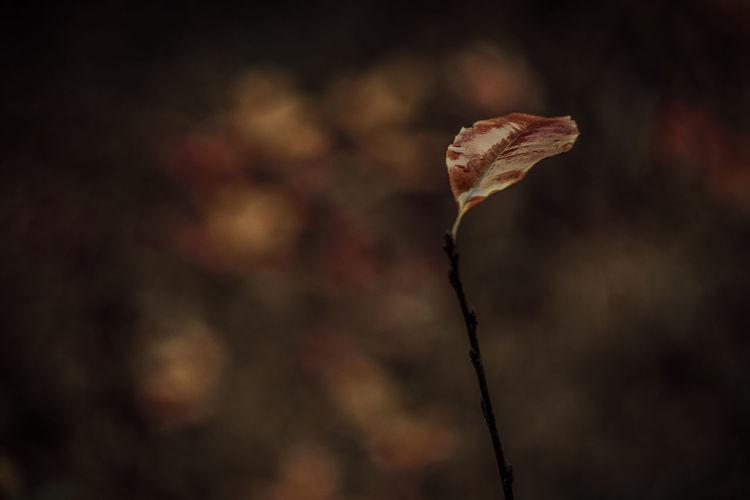 Leaf Autumn Autumn colors Exceptional Photographs Silhouette Bokehlicious Bokeh Love Bokeheffect EyeEm Selects EyeEm Nature Lover Poland Jesień Close-up Dead Plant