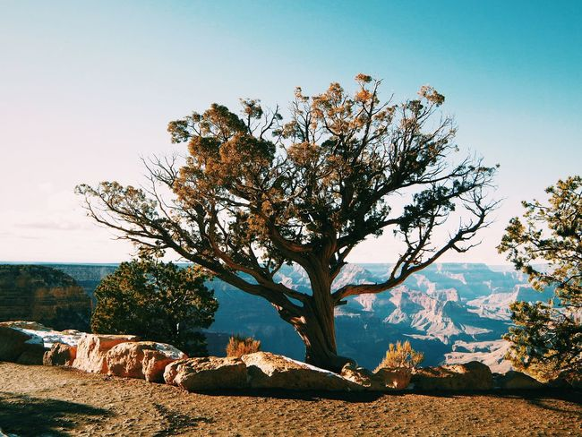 EyeEm Nature Lover Beauty Nature Enjoying Life Arizona Grandcanyon Trees TreePorn Enjoying The View The Great Outdoors - 2015 EyeEm Awards