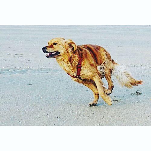 Runnin' Greta
